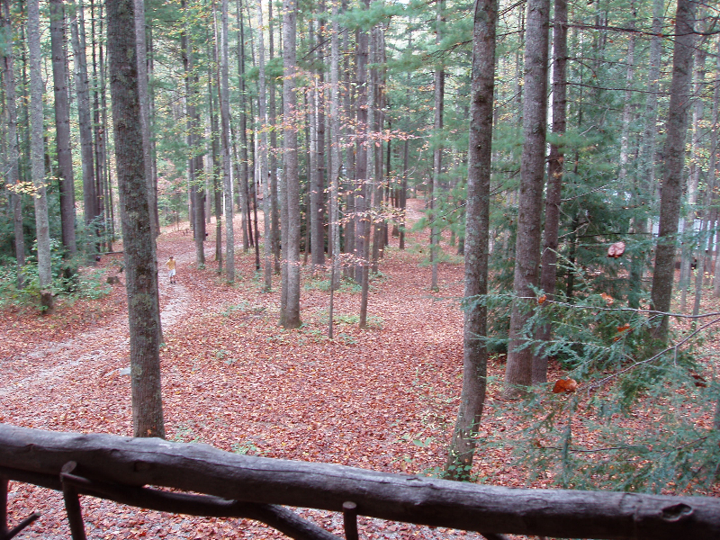View from Buzzard Roost Porch